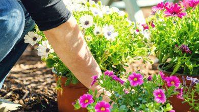 Jak zaplanować rabaty ogrodowe i dodać im lekkości?